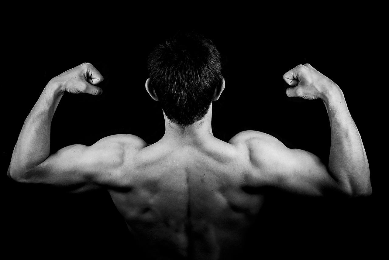 bygg muskler på ett år