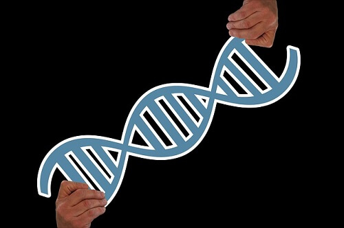 16 aminosyror i kepl