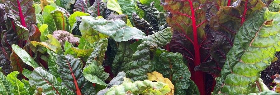 bladgrönsaker och bär innehåller mangan